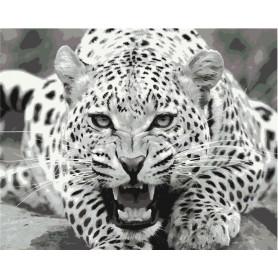 Wild & Dangerous - malen nach zahlen - 40 x 50 cm