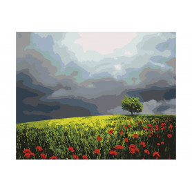 Poppy Field - Paint by Numbers - 40 x 50 cm