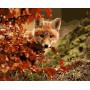 Sly Fox - Schilderen op nummer - 40 x 50 cm