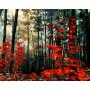 Morning in the Autumn Forest - Schilderen op nummer - 40 x 50 cm