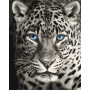 Blue Eyed Leopard - Paint by Numbers - 40 x 50 cm