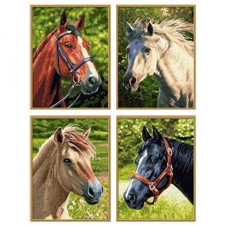 Paarden & pony